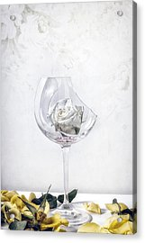 Withered White Rose Acrylic Print
