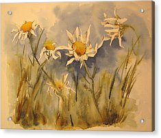 Withering Daisy's Acrylic Print by Ramona Kraemer-Dobson