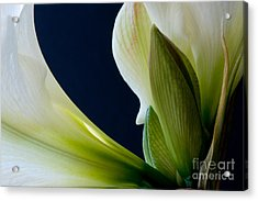 Within 2012 Acrylic Print by Art Barker