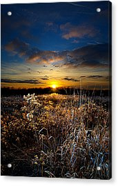 Within Acrylic Print by Phil Koch