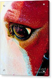 Within The Horse's Eyes Acrylic Print by Annie Zeno