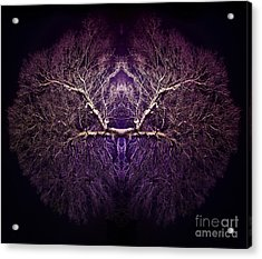 Within Acrylic Print by Tim Gainey