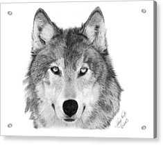 Acrylic Print featuring the drawing Wolf - 004 by Abbey Noelle