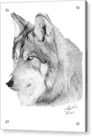 Acrylic Print featuring the drawing Wolf - 006 by Abbey Noelle