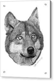 Acrylic Print featuring the drawing Wolf - 017 by Abbey Noelle