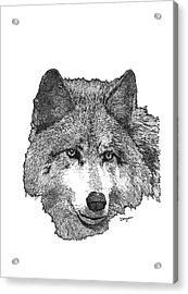 Wolf 1 Acrylic Print