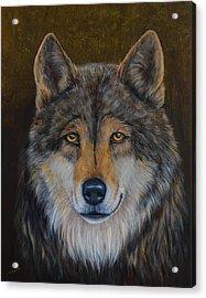 Wolf Alpha Acrylic Print