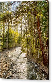 Wolf Creek Afternoon Light Acrylic Print by Omaste Witkowski