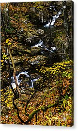 Wolf Creek Cascade Acrylic Print by Thomas R Fletcher