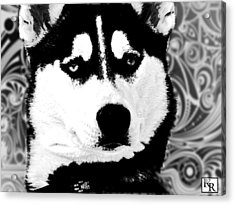 Wolf Dog Black  White B W Acrylic Print