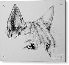 Wolf Eyes Acrylic Print