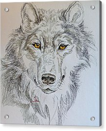 Wolf Eyes  Acrylic Print by Gracia  Molloy