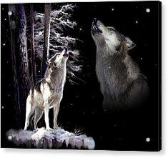 Wolf  Howling Memory Acrylic Print by Regina Femrite