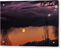 Wolf Moon Acrylic Print by Roger Chenery