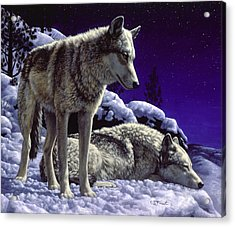Wolf Painting - Night Watch Acrylic Print by Crista Forest