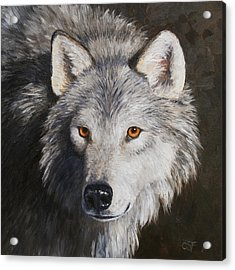 Wolf Portrait Acrylic Print by Crista Forest
