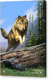 Wolf Run Acrylic Print by Rob Corsetti