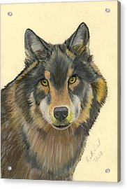 Wolf Acrylic Print by Ruth Seal