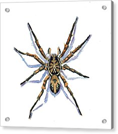 Acrylic Print featuring the painting Wolf Spider by Katherine Miller