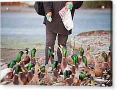 Woman Feeding Mallard Ducks Acrylic Print by Ashley Cooper