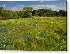 Wonder-filled Meadows Acrylic Print by Lynn Bauer