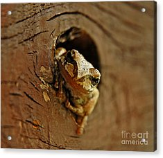 Acrylic Print featuring the photograph Wonder Frog by Nick  Boren