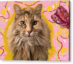 Wonder Kitty Acrylic Print by Jacquelyn Roberts