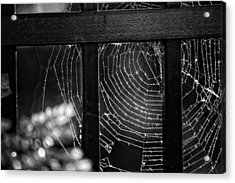 Wonder Web Acrylic Print by Carrie Ann Grippo-Pike