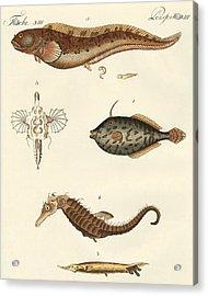 Wonderful Fish Acrylic Print by German School