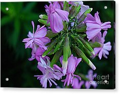 Acrylic Print featuring the photograph Wonderful Morning Flower by John S