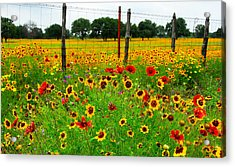 Wonderful Wildflowers Acrylic Print