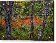 Wonderland Acrylic Print by Darylann Leonard Photography