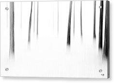 Wonderland Acrylic Print by Scott Pellegrin