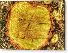 Wood Acrylic Print by Daniel Precht