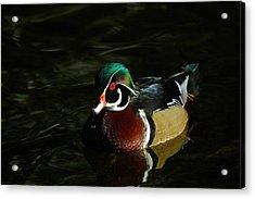 Wood Duck Drip Acrylic Print by Steve McKinzie