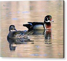 Wood Duck Pair In Kettles Acrylic Print