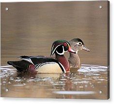 Wood Duck Pair Acrylic Print
