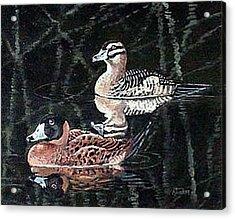 Wood Ducks Study Acrylic Print by Donna Tucker