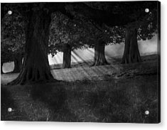 Acrylic Print featuring the photograph Wood I Dream by Stewart Scott