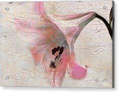 Wood Panel With Amaryllis Flower Acrylic Print