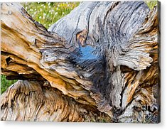 Wood Patterns In Summer Acrylic Print by Teri Brown