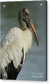 Wood Stork In Oil Acrylic Print
