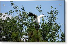 Acrylic Print featuring the photograph Wood Stork by Ron Davidson