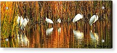 Wood Storks And 2 Ibis Acrylic Print