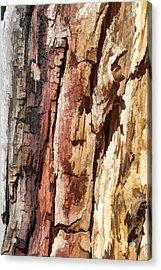 Wood Tones Acrylic Print