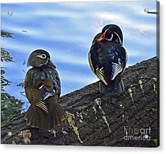 Acrylic Print featuring the photograph Wood You Love Me Forever by Robert Meanor
