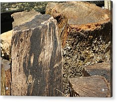 Wood You Acrylic Print by Tim Townsend