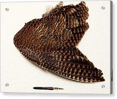 Woodcock Pin-feather Acrylic Print