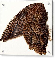 Woodcock Wing Acrylic Print