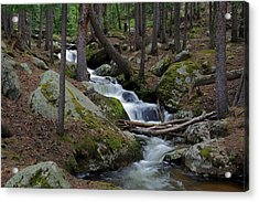 Wooded Stream Acrylic Print